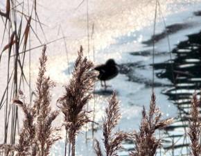 3 марта – Ярило с птицей овсянкой, овсянка.По старому стилю 18 февраля.По народным приметам, если день выдастся сухой, то урожай будет хороший.