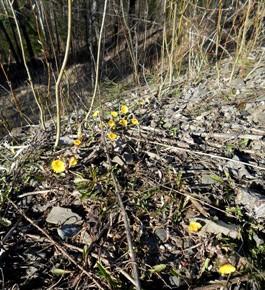 31 марта – Алексей Тёплый. По старому стилю 18 марта. По народным приметам, если к этому времени на склонах появляются первые цветы мать-и-мачехи, то это верный признак тепла в начале апреля и скором приближении лета.