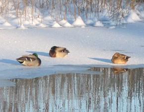 5 марта – Лев-катальщик.По старому стилю 20 февраля.По народным приметам, если в этот день курочка водички у крыльца напьётся, то быть весне дружной и тёплой.