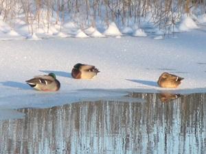 5 февраля — Агафоник-полухлебник. День домашних забот. По старому стилю 23 января. По народным приметам, если гуси и утки купаются в снегу — к оттепели или метели. Если морозом не возьмёт, то все дороги заметёт. Если утром кричит синица — к морозу.