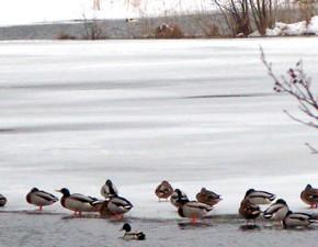 8 марта - Кислые девки.По старому стилю 22 февраля.По народным приметам, с 8 по 15 марта холода могут вернуться.