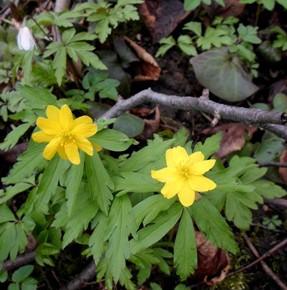 12 апреля – Иван Лествичник. По старому стилю 30 марта.По народным приметам, если зацветёт черешня, то пора сеять кукурузу и свеклу.
