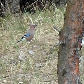 15 апреля – Тит-ледолом, Тит-Поликарпов день. В этот день наблюдали за птицами. Если закричит перепел, будет много хлеба и травы, если дергач – урожайное лето.