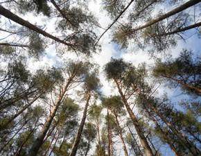 """19 апреля - Федул-тёплый ветряник. По старому стилю 6 апреля. Об этом дне говорили: """"На Евтихия день тихий, а коли Ерема пролётный ярится, ветром грозится, - хоть не сей рано яровины, семян не соберёшь""""."""