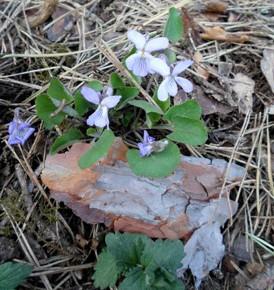 22 апреля – день Евпсихия. По старому стилю 9 апреля. По народным приметам, если земля не рассыпается, пахать её рано – почва сырая, а если рассыпается – время пахать.