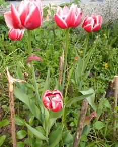 27 апреля - Мартын-лисогон. Вороний праздник. По старому стилю 14 апреля. По народным приметам, если из берёзы течёт много снега, то жди поздней осени. Если зацветает ветла и прилетели стрижи и ласточки, то пора в садах высаживать саженцы.