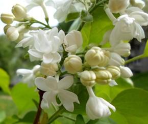 12 мая – Девять мучеников. По старому стилю 28 апреля. По народным приметам, если в этот день много оводов, будет большой урожай огурцов.