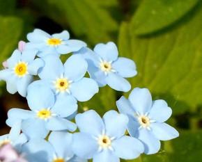 24 мая - Мокий мокрый. По старому стилю 11 мая. По народной примете, если на Мокия мокро, то всё лето мокрое. Если туманно и багряный восход, то придёт грозовое лето.