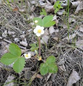 3 мая - Фёдор. Окликание предков. По старому стилю 20 апреля.По народным приметам, если весна дружная, земля сделалась посевной, то пшеницу надо сеять дня за три до Егория.