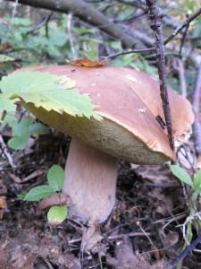 25 сентября — Артамон. Автаном. Змеиный день. По старому стилю 12 сентября. По народным приметам, если лист с берёзы и дуба опадает не чисто, то жди суровую зиму.