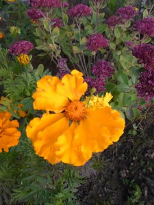 2 октября — Зосим и Саватей. Трофимовы вечёрки. По старому стилю 19 сентября. По народным приметам, если пчёлы осенью плотнее леток залепляют, то будет холодная зима.