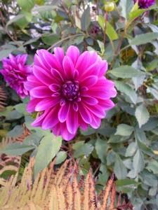 29 сентября — Ефимия. Птичья костка. По старому стилю 16 сентября. По народным приметам, если на Ефимию гром гремит, то зима будет короткая, мягкая и белоснежная.