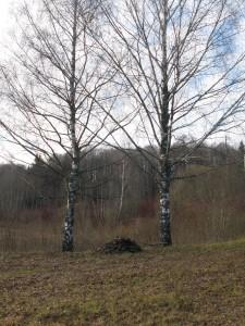 29 октября — Лонгин-сотник. День зрения. По старому стилю 16 октября. По народным приметам, если на Лонгина небо заплачет, то следом за дождём и зима придёт.