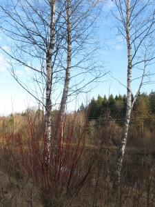 20 октября - Сергий зимний. По старому стилю 8 октября. По народным приметам, если земля покроется снегом, то к Матрёне (22 ноября) быть зиме.