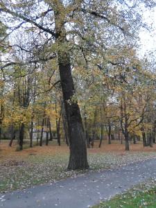 16 октября - Денис Позимний. По старому стилю 3 октября. По народным приметам, если день выдался без мороза, то раньше Артемьева дня не ударить ни одному морозу.