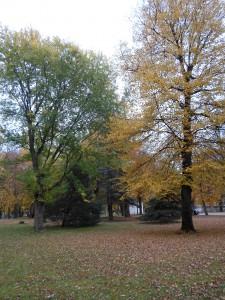 13 октября - Григорьев день. По старому стилю 30 сентября. По народным приметам, если снег упадёт, то зима не скоро настанет.