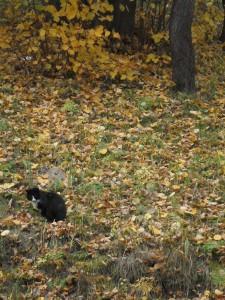 30 октября — День Осия. По старому стилю 17 октября. По народным приметам, если кошка крепко спит — к теплу