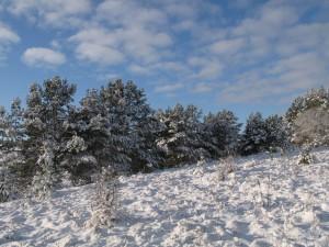3 января - Пётр-полукорм. По старому стилю 21 декабря. По народным приметам, если снег не ляжет до 3 января — год будет неурожайным.