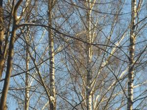 12 февраля — Трёхсвятие. По старому стилю 30 января. По народным приметам, если деревья покрылись инеем — к теплу.